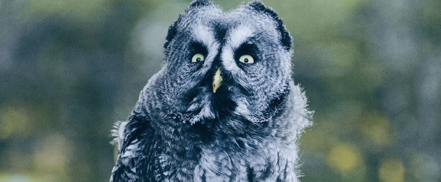 blog-success-secrets-nathans-hacks-how-to-defeat-distraction-to-focus-100%-on your HSC-distracted-owl