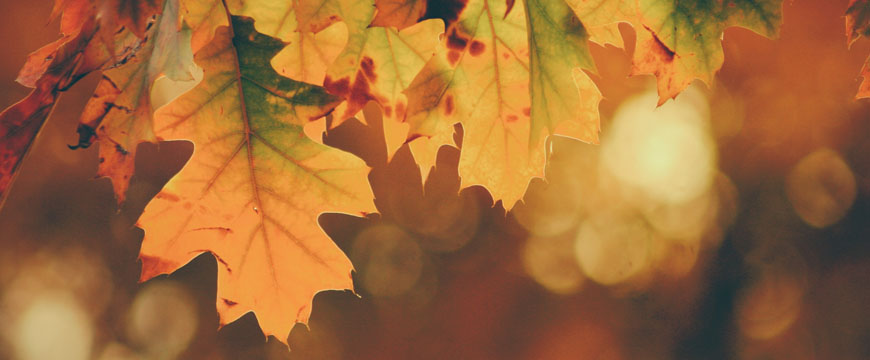 english-guide-year-9-how-to-analyse-poetry-autumn