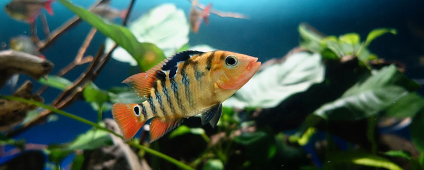 picture of fish in a tank to illustrate being a little fish in a big pond not a big fish in a little pond english-5-comprehension-skills-year-6-students-need-for-high-school