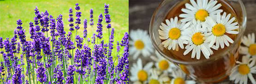 blog-hacks-How-to-State-Rank-ALL-Your-Accelerated-Courses-lavender-chamomile