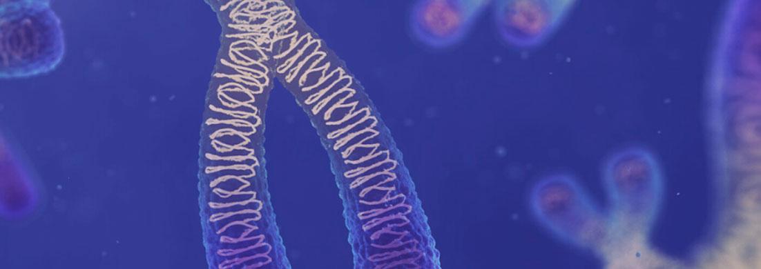 beginners-guide-to-year-12-biology-heredity-hero-banner
