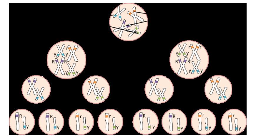 image illustrating assortment