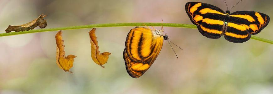 12 English blog emma analysis transformation