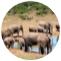 beginner's guide to Year 11 Biology - elephant herd