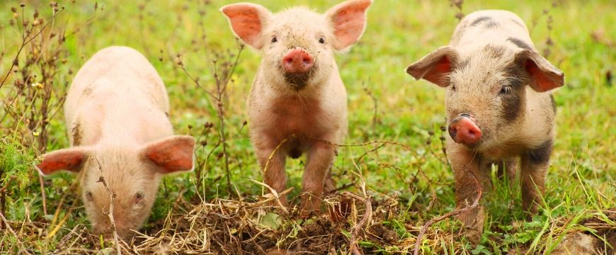 blog-english-5-techniques-to-make-your-audience- believe-your-speech-persuasive-techniques-for-speeches-3-little-pigs