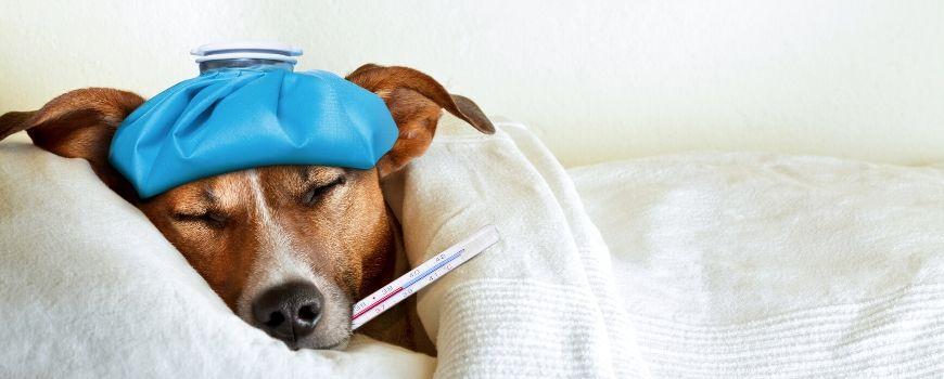 blog english literary technique simile sick as a dog