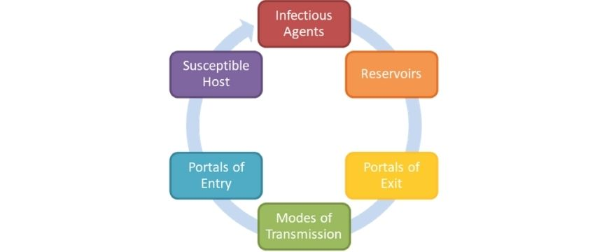 guide-biology-year-12-module-7-infectious-disease-chain-of-infection