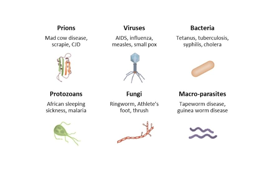 guide-biology-year-12-module-7-infectious-disease-types-of-microbes