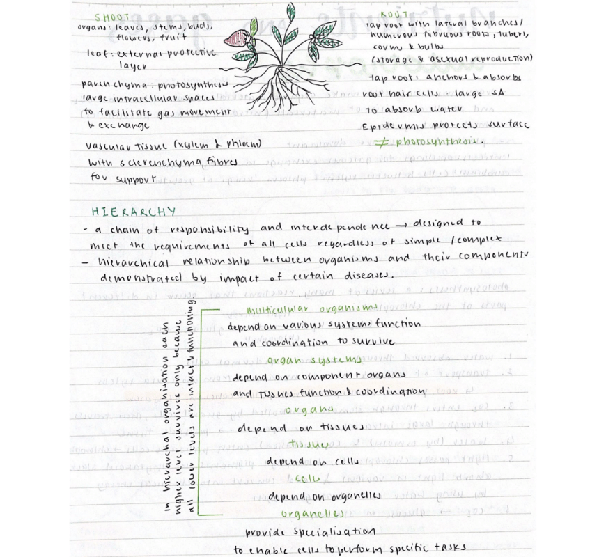 blog-success-secret-jennifers-preparation-hacks-to-ace-year-11-exam-biology-notes-with-diagram